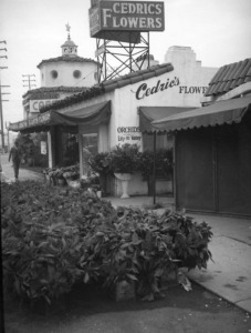 Looking southwest down La Brea Avenue from outside of Cedric's Flower Shop, located at 677 S. La Brea Avenue at Wilshire Boulevard (far left, center). Numerous pots of poinsettias are visible in the street. McDonnell's Wilshire Cafe was located on the south side of the flower shop. (Herman J. Schultheis Collection; Los Angeles Public Library)