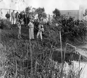 "Maintenance supervisor, Joe Schambrey (right), assistant supervisor, John Estes (center) and Dennis Anderson (left) try to recover a body from the Tar Pits as spectators behind the fence look on. Photo caption reads: ""Park maintenance men probe the main pit at La Brea Tar Pits for body of possible suicide victim. Several feet of rain water lays on surface of bubbling tar"". Photo dated: Dec. 21, 1964. (Herald-Examiner Collection; Los Angeles Public Library)"