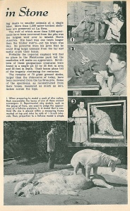 """Ice-Age Zoo Lives"" – Popular Science, March 1944 (Page Two)."