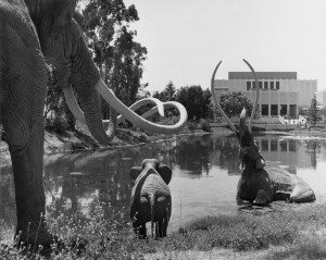 Three life-sized replicas of giant Imperial Mammoths, sculpted by artist Howard Ball, are shown on the shore at the tar pits adjacent to the Los Angeles County Museum of Art, present in the background. (Water and Power Associates)