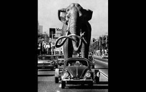 Sculptor Howard Ball tows his life-size Imperial Mammoth behind his 1958 Volkswagen to the La Brea tar pits. This photo was published in the Jan. 19, 1967 LA Times. (Photographer: Joe Kennedy; Los Angeles Times) http://framework.latimes.com/2012/09/17/mammoth-delivery-to-la-brea-tar-pits/