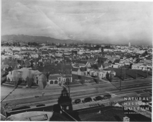 View north from San Vicente Boulevard of Carthay Circle neighborhood, 1929. The white tower in the upper right is the Desmond's Building (Wilshire Tower) on Wilshire Boulevard. [Seaver Center Collection; Los Angeles Museum of Natural History]